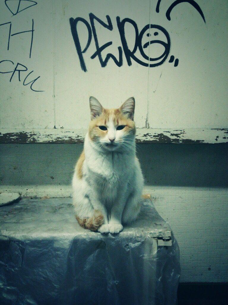 猫の写真インスタ映え